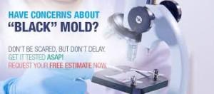 black mold investigation